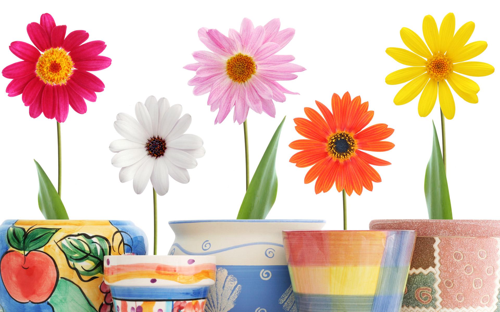 عکس+گل+و+گلدان